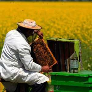 arı-yetiştiriciliği