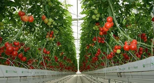 örtü-altı-tarım-nedir