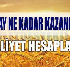 Buğday Ne Kadar Para Kazandırır? (Maliyet Hesaplama)
