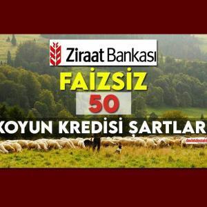 Ziraat Bankası Faizsiz 50 Koyun Kredisi Şartları 2021