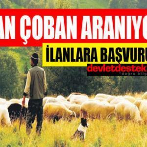 Afgan Çoban Arıyorum Diyenlere İlanlar! (Yatılı Suriyeli Özbek)