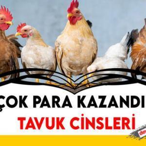 En Çok Yumurta Veren Tavuk Cinsleri 2021